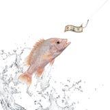 诱饵捕鱼 库存图片