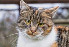 说你做了什么?的一张家猫面孔 一只五颜六色的小猫与嫉妒和有迷离背景 库存照片