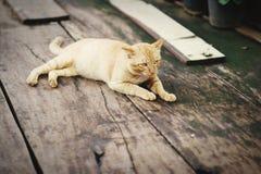 说谎在一个木地板上的一只黄色猫 库存照片