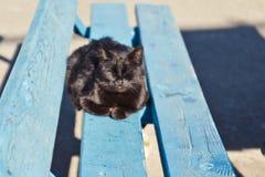 说谎在一个长木凳的黑围场猫 免版税库存图片