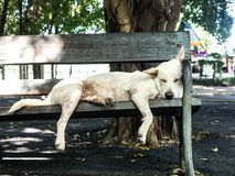 说谎在一把椅子的白色流浪狗在庭院里 免版税库存图片