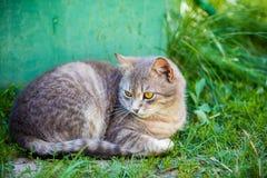 说谎在一棵草的猫在围场 库存图片
