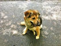 说谎在与非常哀伤的聪明的眼睛的路面的狗 库存图片