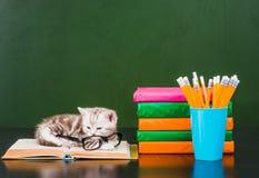 说谎在书的小猫临近空的绿色黑板 免版税库存照片