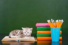 说谎在书的小猫临近空的绿色黑板 库存图片
