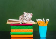 说谎在书的平纹小猫临近空的绿色黑板 库存图片