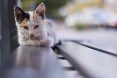 说谎在公共汽车站长凳的一只冷清的街道猫 免版税图库摄影