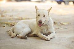 说谎在公园的一条白色狗 免版税图库摄影