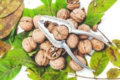 说谎在叶子的堆核桃 在金属胡桃钳附近 库存图片