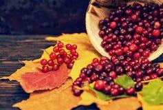 说谎在叶子的有一点疏散花楸浆果临近木pla 库存照片