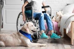 说谎在地板上的逗人喜爱的服务狗在轮椅的女孩附近 图库摄影