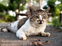 说谎在地面上的一只小的逗人喜爱的猫 免版税库存图片