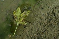 说谎在地面上的一片干燥秋天叶子 库存图片