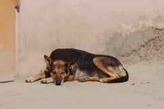 说谎在地面上的哀伤的孤独的狗对墙壁 免版税图库摄影