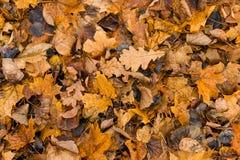 说谎在地面的下落的秋天黄色叶子 叶子纹理背景 免版税库存照片