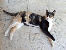 说谎在大理石地面的猫 图库摄影