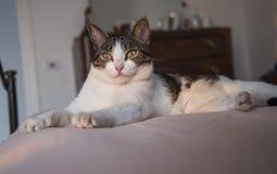 说谎在床上的幼小家猫 免版税库存图片