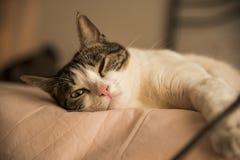 说谎在床上的幼小家猫 库存照片