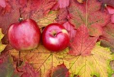 说谎在木桌周围的成熟水多的红色苹果计算机夫妇  免版税库存照片