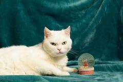 说谎在毯子的白色猫在一个水晶雪球旁边 图库摄影