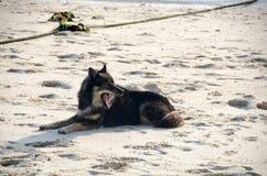 说谎在沙子的狗在海滩 免版税库存图片