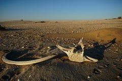 说谎在沙子的鲸鱼骨头 免版税库存图片