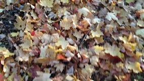 说谎在沙沙响叶子的女孩的地面和腿的秋天叶子的看法 乐趣和娱乐在金黄秋天 影视素材