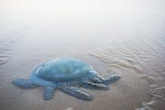 说谎在海滩地板上的箱子水母 免版税库存图片