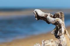 说谎在海滩的大树枝 库存图片