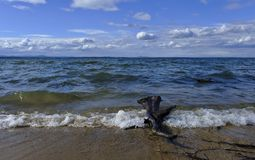 说谎在湖的岸的木头老树桩在水中 免版税库存照片
