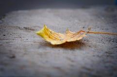 说谎在石关闭的黄色叶子  免版税库存照片