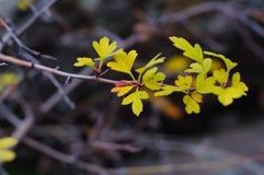 说谎在石关闭的黄色叶子  库存照片