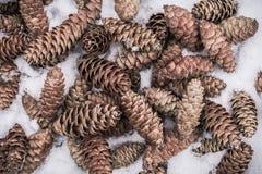 说谎在积雪的地面的云杉的树锥体 免版税图库摄影