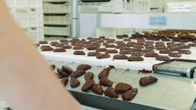 说谎在糖果店工厂的传送带的束美味的巧克力甜点 糖果工厂 股票录像