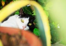 说谎在绿草草坪,浅景深的逗人喜爱的猫portr 库存照片
