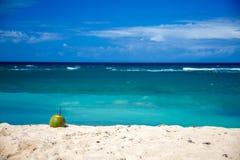 说谎在美丽的海滩的成熟椰子加勒比海 图库摄影