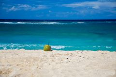 说谎在美丽的海滩的成熟椰子加勒比海 免版税库存照片