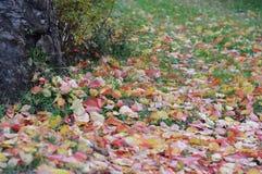 说谎在草的黄色红色叶子秋天风景  免版税库存图片