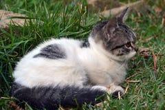说谎在草看的逗人喜爱的小的小猫 免版税库存图片
