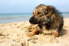 说谎在街道上的孤立哀伤的狗 杂种 库存图片