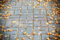 说谎在街道路面的黄色秋叶 免版税库存照片