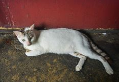 说谎在路的一只懒惰猫 库存照片