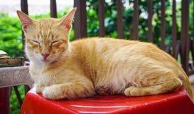 说谎在路的猫 免版税图库摄影