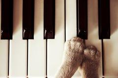 说谎在钢琴钥匙的猫爪子紧密猫使用 免版税图库摄影