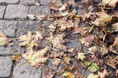 说谎在铺路石的黄色秋叶紧密 免版税库存图片
