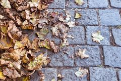 说谎在铺路石的黄色秋叶 免版税库存照片