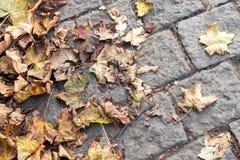 说谎在铺路石美好的抽象秋天背景的黄色秋叶 免版税库存照片