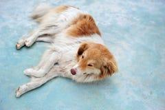 说谎在阿尔巴尼亚的边路的流浪狗 库存图片