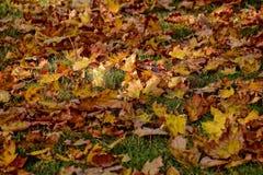 说谎在w的绿草的黄色,金黄,棕色秋叶 库存图片