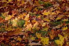 说谎在w的绿草的黄色,金黄,棕色秋叶 免版税库存照片